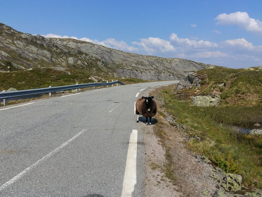 Норвегія: трек довкола фйорду Lysefjorden Rundt