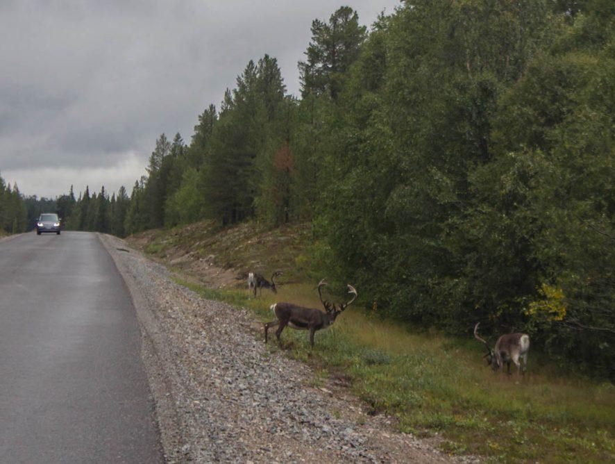 Автоподорож до Норвегії