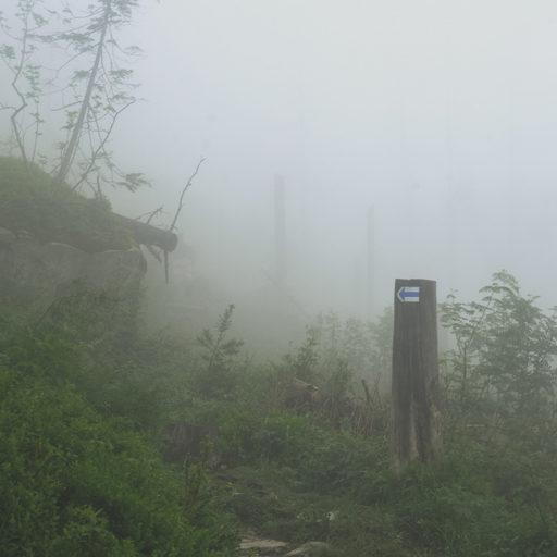 Туман в лісі