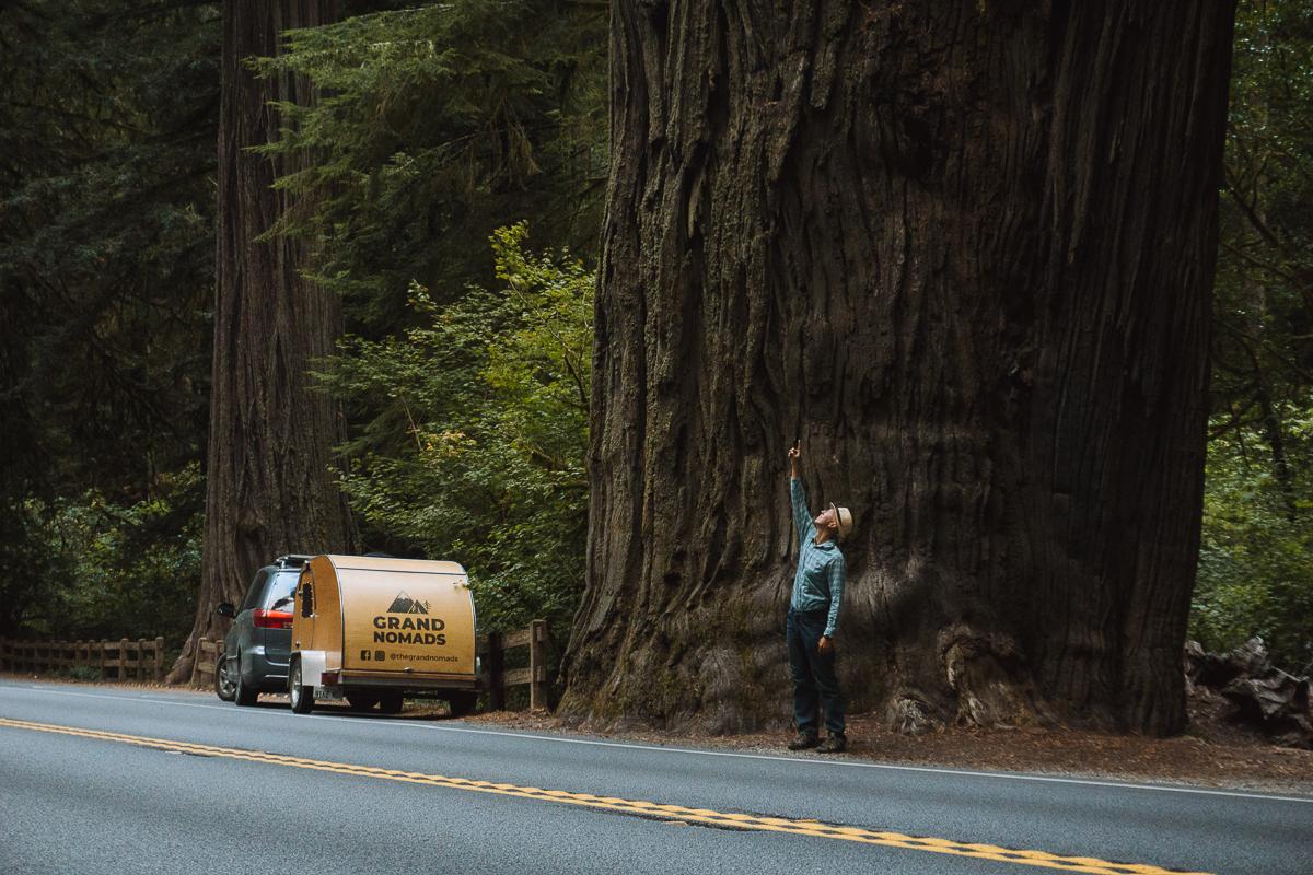 Червоне дерево в Redwoods National Park, штат California