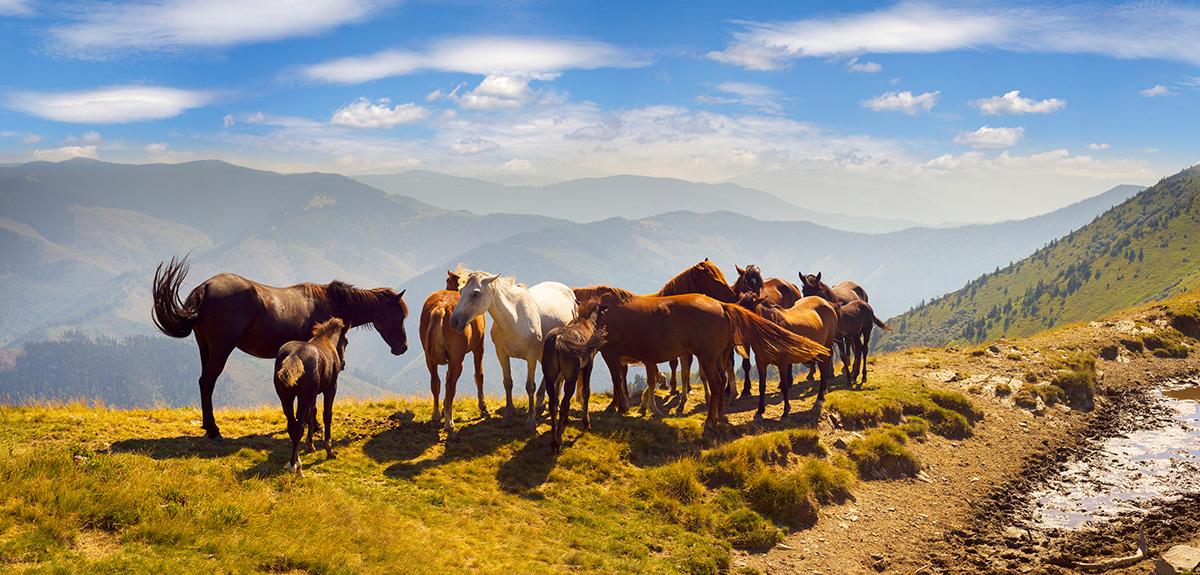 Карпатські локації: Міжгір'я, Колочава та околиці